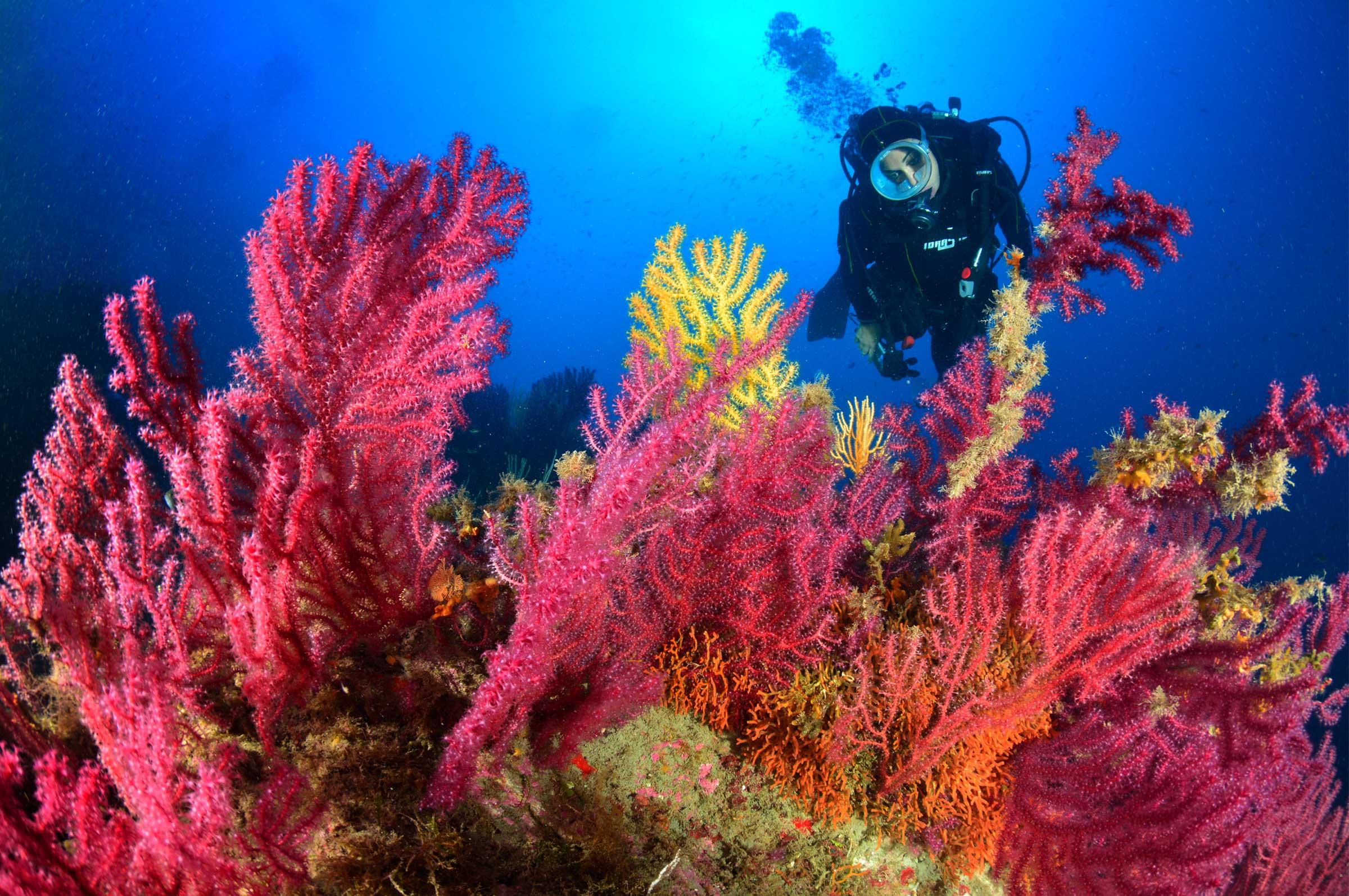 Escursioni Milazzo e Isole eolie terrestri e marine-Scoglio della portella-Blunauta Diving Center