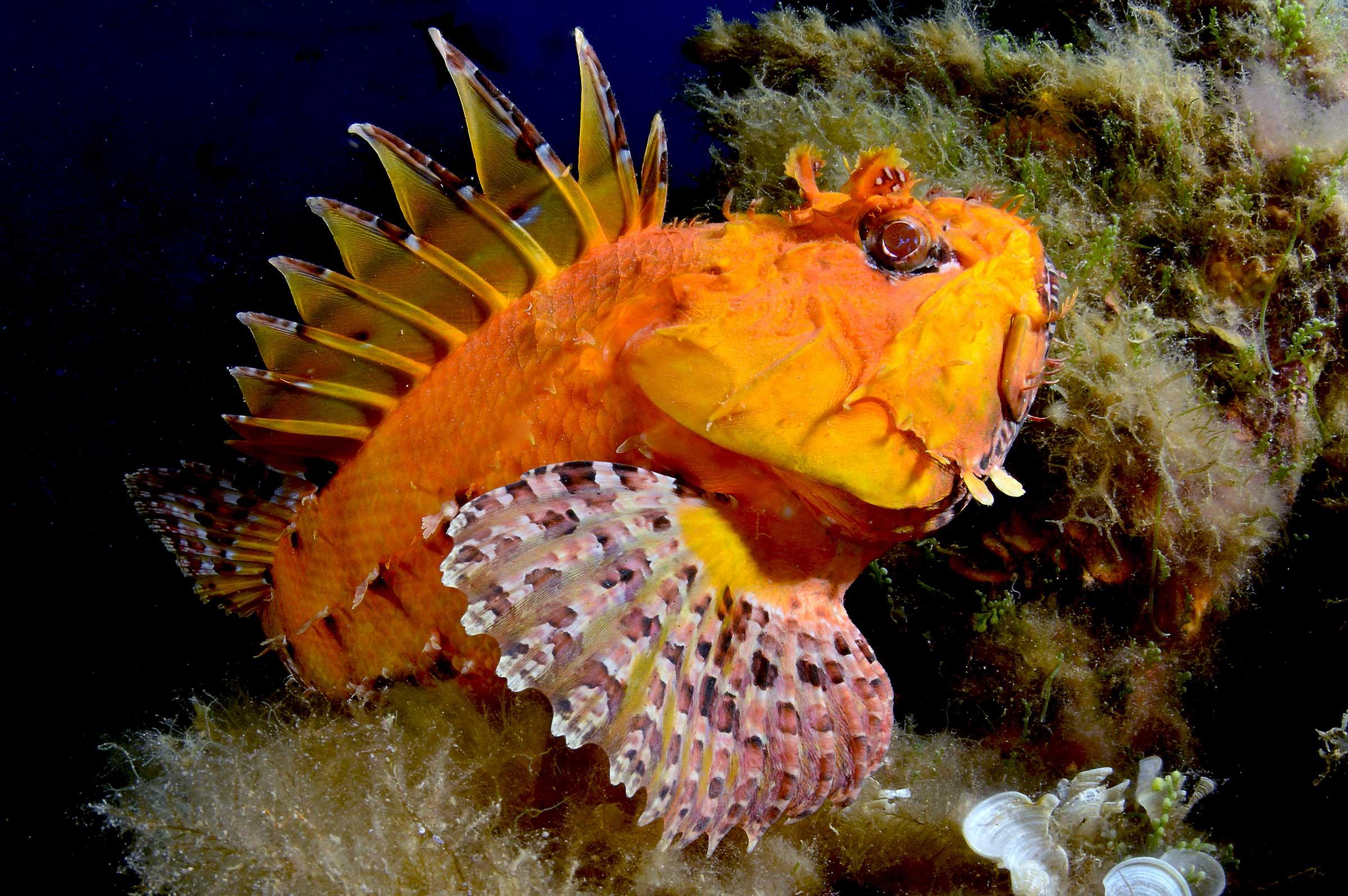 Immersioni Subacquee Milazzo,Snorkeling,Escursioni-Blunauta Diving Center