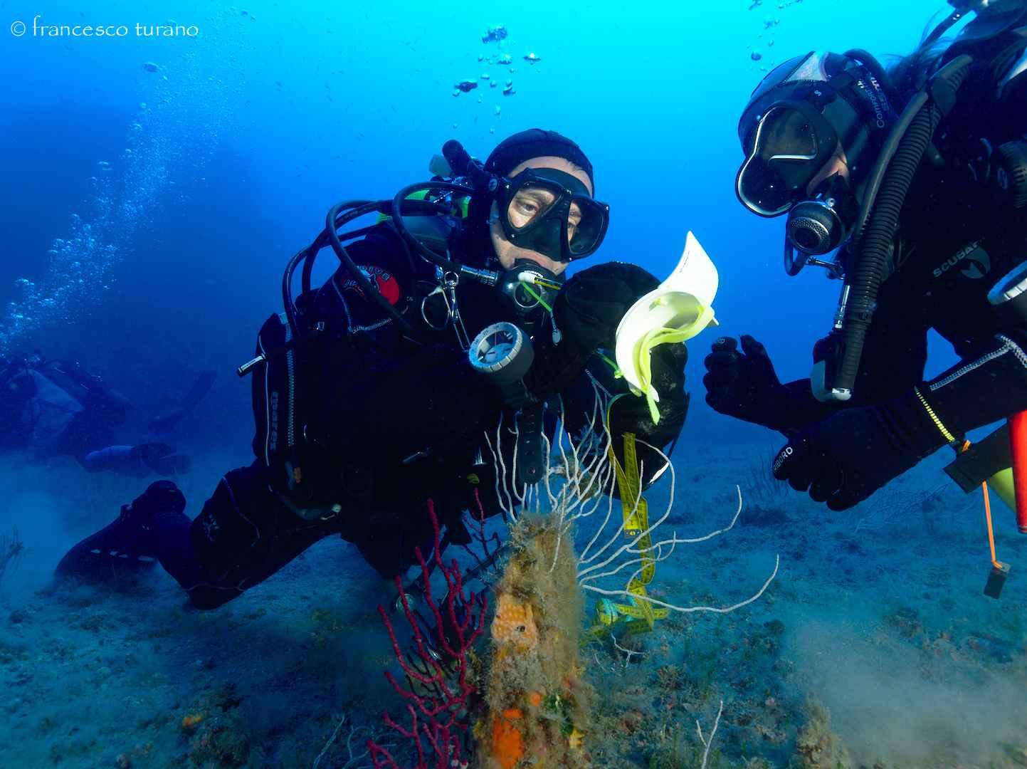 Corsi di Biologia marina,Immersioni Subacquee Milazzo,Escursioni,Snorkeling-Blunauta Diving