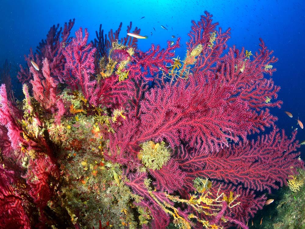 Immersioni Subacquee Capo Milazzo-La Montagnola-Blunauta Diving