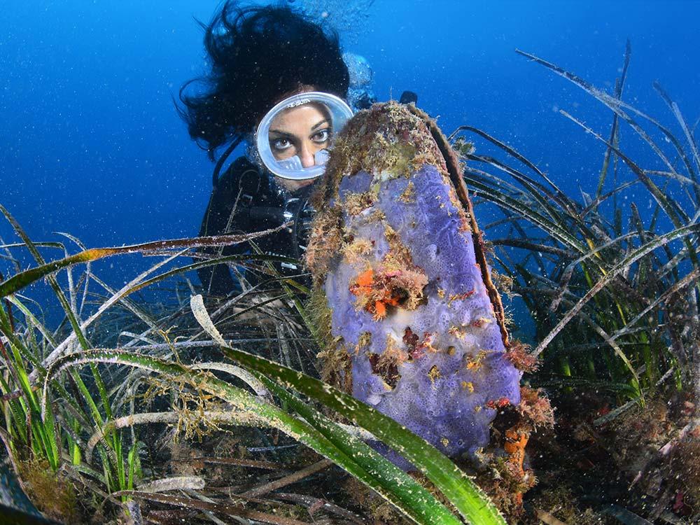 Escursioni Milazzo, Isole eolie,Immersioni Subacquee-Pianoro delle nacchere-Blunauta Diving
