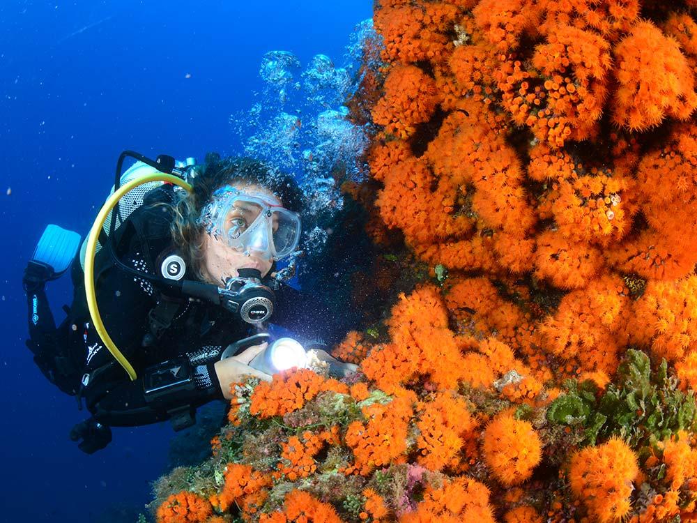 Immersioni Subacquee Milazzo-Secca di ponente-Blunauta Diving