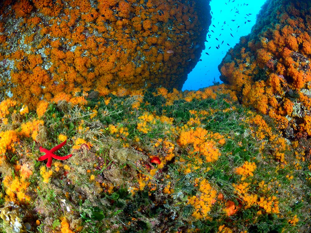 Escursioni Milazzo,Isole eolie,Immersioni Terrazze Blu-Blunauta Diving Center