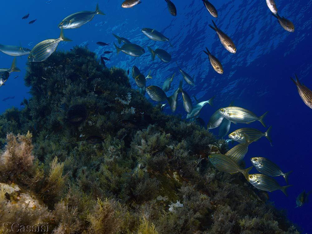Escursioni Isole eolie,Immersioni Subacquee-CapoGrosso_Vulcano-Blunauta Diving Center