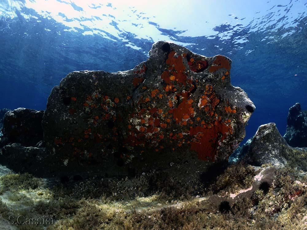 Escursioni subacquee Sicilia, Scogli le formiche Panarea-Blunauta Diving Center