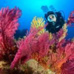 Escursioni Milazzo e Isole eolie, Immersioni Subacquee-Secca di ponente-Blunauta Diving