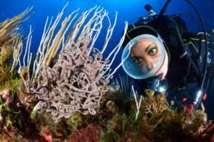 Escursioni Milazzo e Isole eolie,immersioni subacquee-Stella Gorgone-Blunauta Diving Center