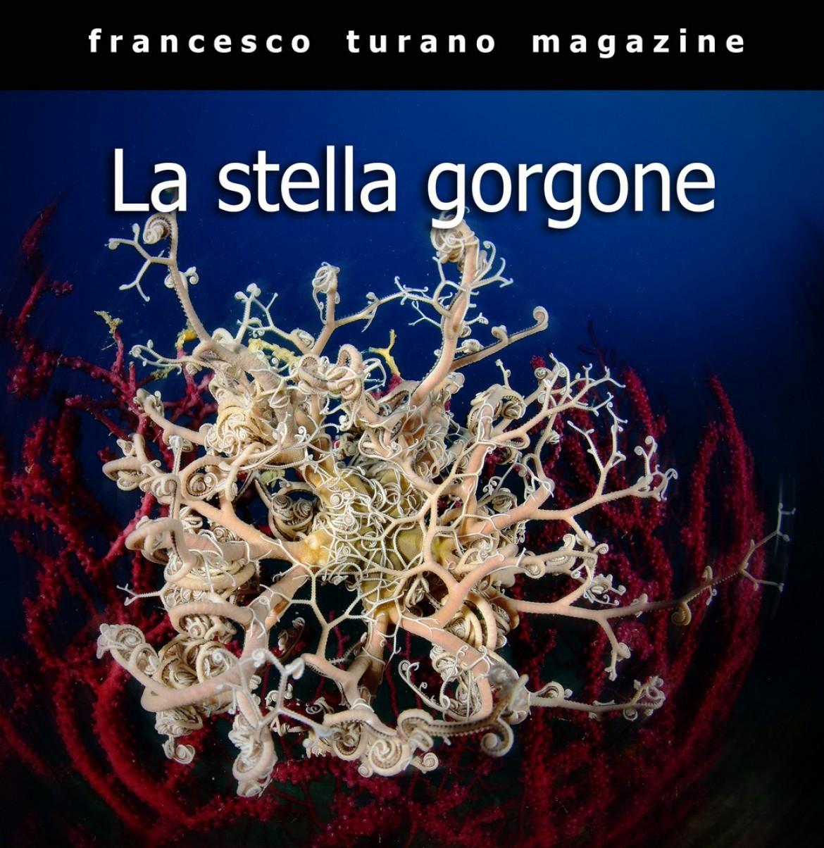 BIOREPORTAGE – LA STELLA GORGONE
